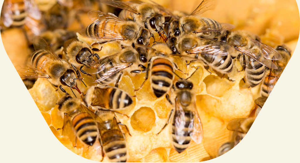 Bees centered on honeycomb