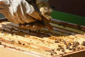 Behandlung eines Bienenstock durch Sublimation (5 ml pro Rahmen)